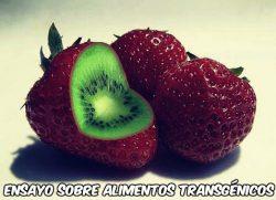 Ensayo sobre alimentos transgénicos