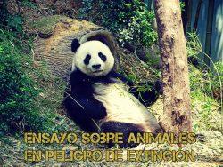 Ensayo sobre animales en peligro de extinción