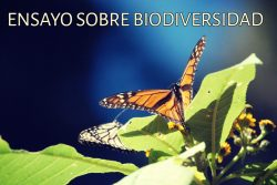 Ensayo sobre biodiversidad