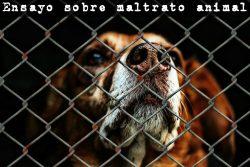 Ensayo sobre maltrato animal